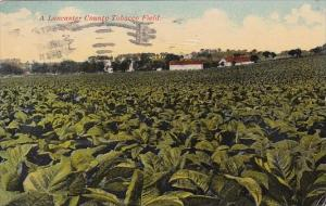 A Lancaster County Tobacco Field Pennsylvania 1912