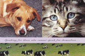 Advertising SPCA Vancouver Regional Branch Canada