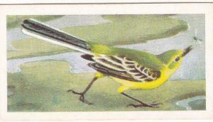 Trade Card Brooke Bond Tea Wild Birds in Britain 14 Yellow Wagtail