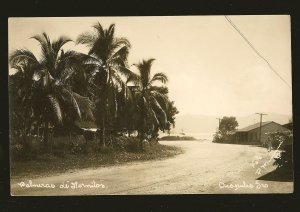Panama Palm Trees Postmaked 1938 Cristobal Canal Zone Real Photo Postcard