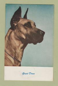 Great Dane Dog Postcard Canine Head Study Vintage