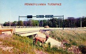 PA - Pennsylvania Turnpike. Fort Washington, Deer Crossing