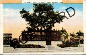 1952 HAVANA CUBA Fraternity Tree, Ceiba planted soil countries, postcard jj001