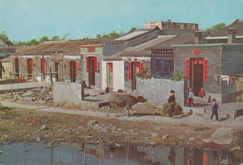 HONG KONG , China , 1950-70s ; New Territories farming Village