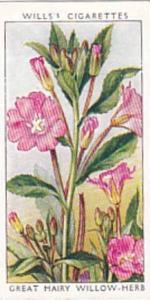 Wills Vintage Cigarette Card Wild Flowers 1936 1st Series No 48 Great Hairy W...