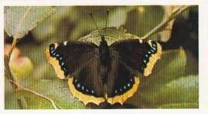 Grandee Vintage Cigarette Card British Butterflies 1984 No 15 Camberwell Beauty