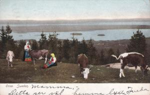 ORSA, Sweden, PU-1908; Farm Life, Women And Cows