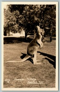 Real Photo Postcard ~Sydney Australia~Koala Park Sanctuary Kangaroo~1938 RPPC