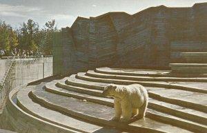 WINNIPEG, Manitoba, 50-60s; Assiniboine Park , Polar Bear Den