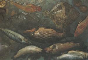 Red Rainbow Trout Gurnet Golden Carp Mackerel Turbot Still Life Food Postcard
