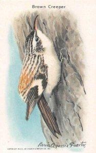 TC79 Arm & Hammer Brown Creeper Bird Series Baking Soda Vintage Trade Card