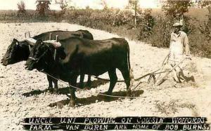 AR, Van Buren, Arkansas, Black Americana, RPPC, Plowing with Bulls