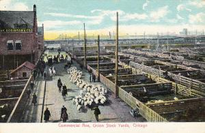 Commercial Avenue, Union Stock Yards, CHICAGO, Illinois, 1901-07; Sheep in Road