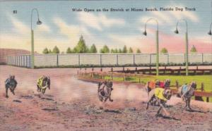 Wide Open On The Stretch At Miami Beach Florida Dog Track 1948