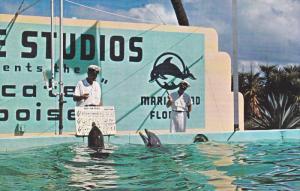 Dolphins Singing, Marineland, Oceanarium, ST. AUGUSTINE, Florida, 40-60's