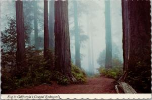 Fog in California's Coastal Redwoods CA c1978 Vintage Postcard D37 *As Is