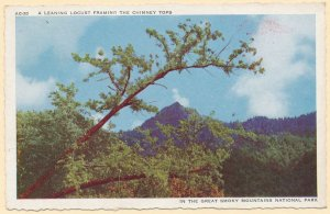 Leaning Locust Tree over Chimney Tops Great Smoky Mountains TN Tennessee pm 1941