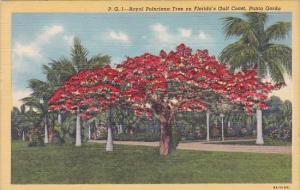 Florida Sarasota Royal Poinciana Tree On Florida's Gulf Coast Punta Gorda