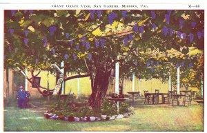 Giant Grape Vine, San Gabriel Mission, Cal. Z-66