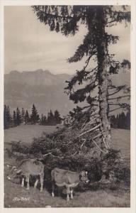 Switzerland Alp Idyll Photo