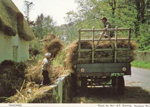 Thatching At Dorset Womens Institute Postcard