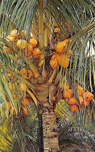 Fruit Assorted Coconut Palm Tree Florida, USA Unused