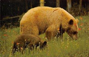 Black Bear Unused