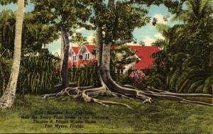 Florida Fort Myers Moreton Bay Fig Tree Edison Winter Home 1953 Curteich