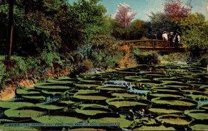 Minnesota St Paul Como Park The Famous Lily Pond 1909