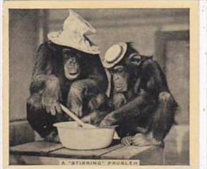 Phillips Cigarette Card Our Favorites No 11 Monkeys Stirring Pot