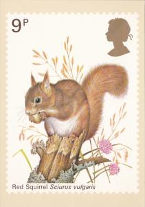 Stamps Of Great Britain Animals Red Sqirrel Issued 5 October 1977