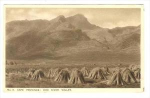 Cape Province: Hex River Valley, South Africa , 1910-30s