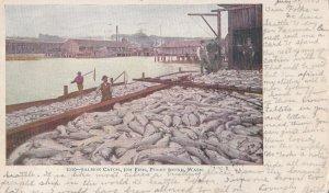 PUGET SOUND, Washington, PU-1905; Salmon Catch, 30M Fish