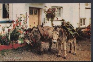 Devon Postcard - Clovelly Donkeys  DC1501