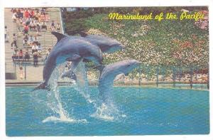 Leaping Dolphin Trio, Marineland Of The Pacific, 1940-1960s