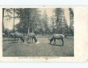 Pre-1907 ELK AT POINT DEFIANCE PARK Tacoma Washington WA c8375