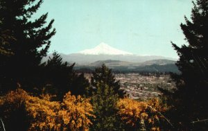 Portland, OR, Scotch Broom & Mt. Hood, 1959 Chrome Vintage Postcard g8968
