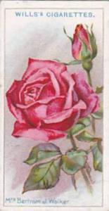 Wills Vintage Cigarette Card Roses 1926 No 36 Mrs Bertram J Walker