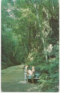 Fern Gully, Ocho Rios, Jamaica, unused Postcard