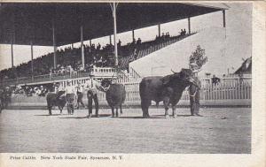 New York Syracuse Prize Cattle New York State Fair