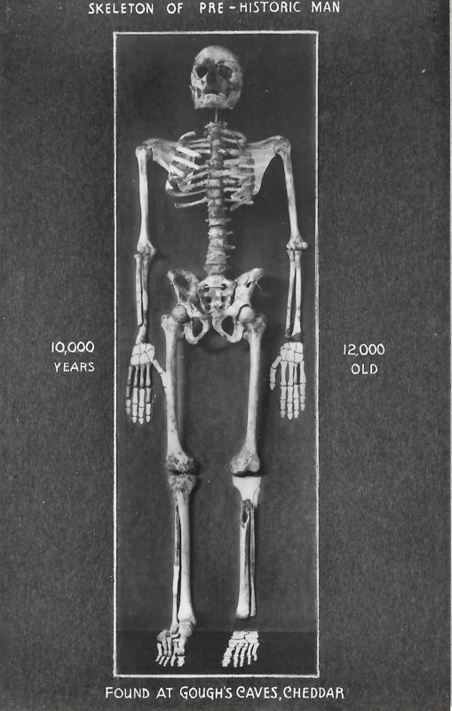 Scarce Vintage Photo Postcard of Skeleton of Pre-Historic Man, Macabre, Cheddar