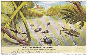 Liebig Vintage Trade Card S1673 Pond Life No 1 Vijveroper Draaikever Waterloper