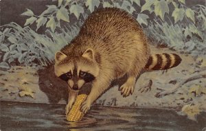 Raccoons Painted by Al Kreml Unused