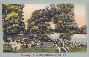 Greetings From Blooming Glen Pennsylvania Sheep Grazing Scene