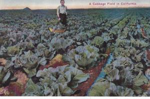 California Typical Cabbage Field