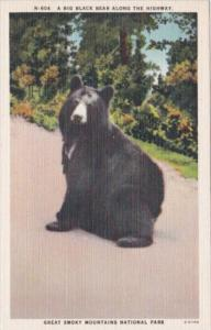 Big Black Bear Along The Highway Great Smoky Mountains National Park