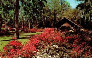 South Carolina Orangeburg Edisto Gardens