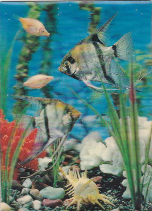3d Hologram Postcard ; Fish , 1970s ; #2