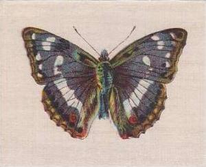 R J Lea Golden Knight Vintage Silk Cigarette Card Butterflies The Purple Emperor