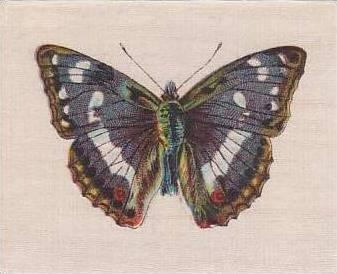 R J Lea Golden Knight Vintage Silk Cigarette Card Butterflies The Purple Emperor